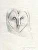 Owl sketch_Vesna_credit