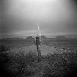 monumental_cactus_ryansynove